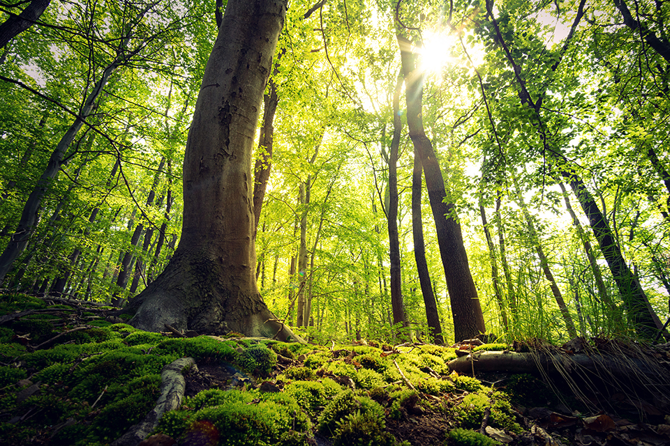 """""""Doing Well by Doing Good"""" Environmentalism and the Role of Responsible Investing"""